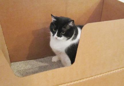 Will Drano Unclog Cat Litter