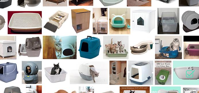 kitten supplies